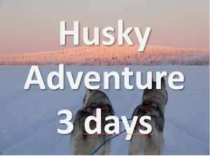 Lappesuando - Husky 1 Day Tour